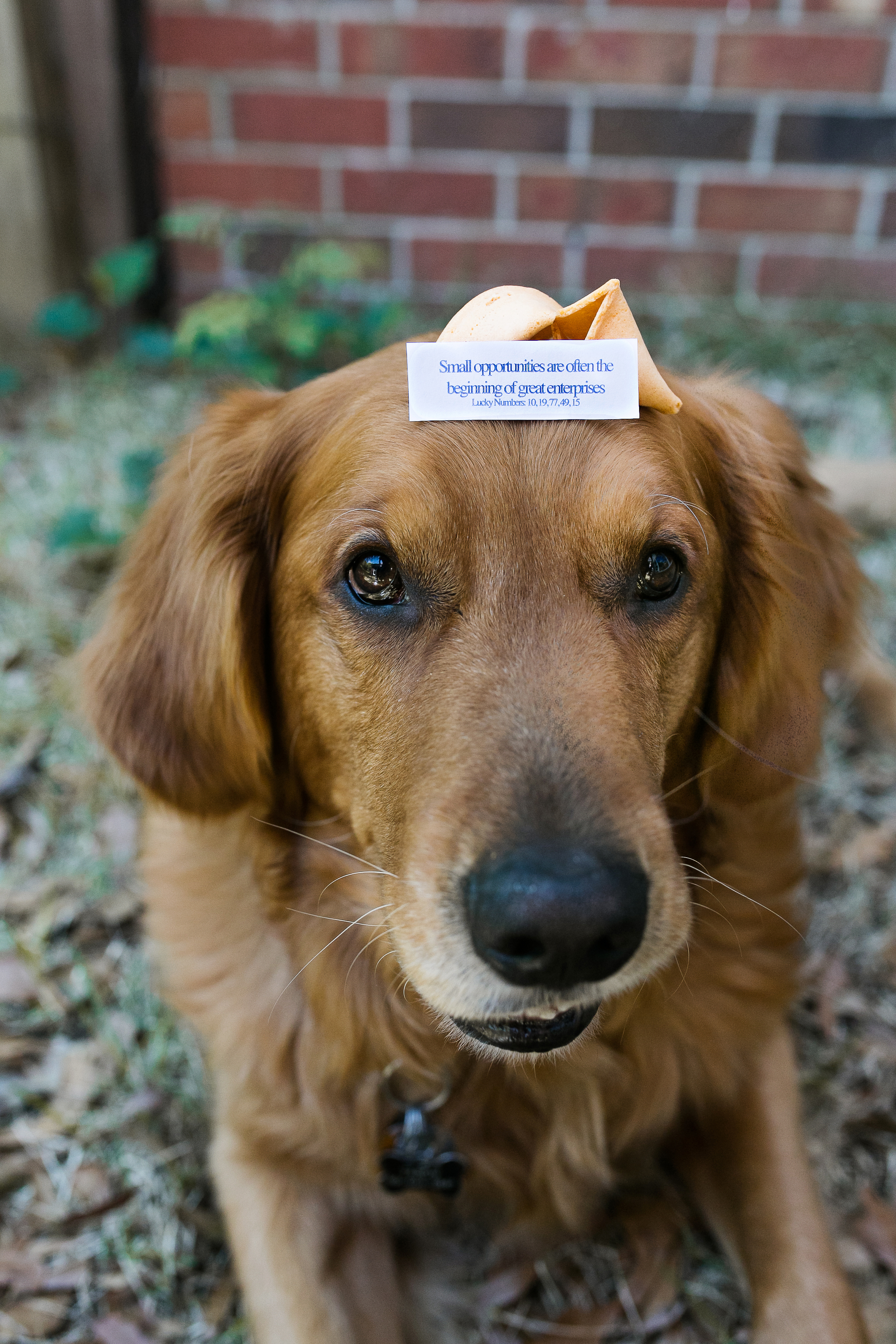 dog-with-fortune-cookie